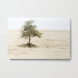 lion under a tree, Ngorongoro Crater, Tanzania Metal Print
