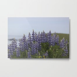 Lupine Flowers Photography Print Metal Print