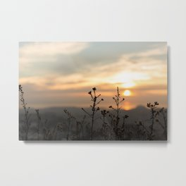 Fine looking weeds. Metal Print