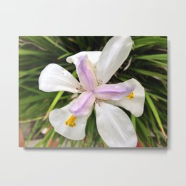 African Lily Metal Print