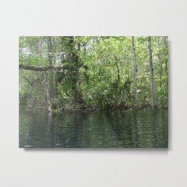 Silver Springs Shoreline, Florida Metal Print