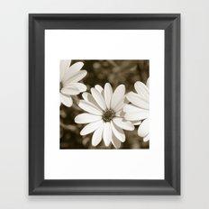 Monochrome Daisy Framed Art Print