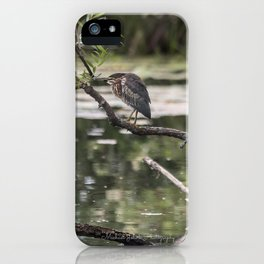 Green Heron on a Branch iPhone Case