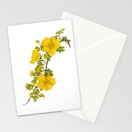 "Rosa Foetida by Alfred Parsons (part of ""The Genus Rosa,"" published in 1914) Stationery Cards"