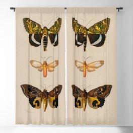 Butterflies 1936 Illustration Blackout Curtain