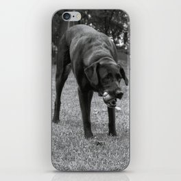 Play Dog iPhone Skin