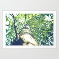 birch Art Prints featuring Birch by nadja-elli