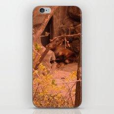 Yoghi iPhone & iPod Skin
