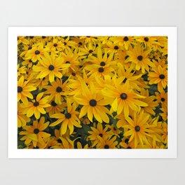 yellow daisies Art Print