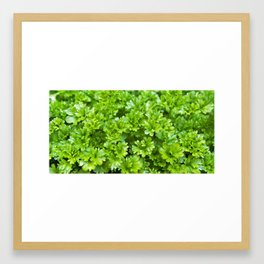 Green parsley herb pattern Framed Art Print