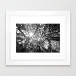 Banyan Tree Framed Art Print