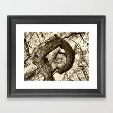 Corkscrew Tree Framed Art Print