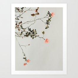 Pink Wild Roses Art Print