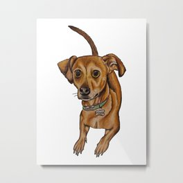 Maxwell the dog Metal Print