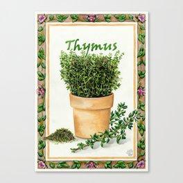 THYME (Thymus) Canvas Print
