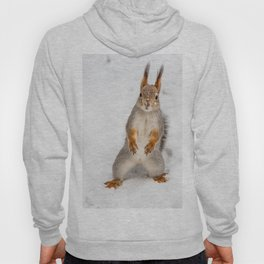 Do you have any boots for squirrels? Hoody