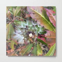 Dandelion Seeds in Fibonacci Formation Metal Print