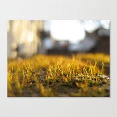 Brooklyn Moss Canvas Print
