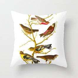 Lazuli Finch, Crimson-necked Bull-Finch, Gray-crowned Linnet, Cow-pen Bird, Evening Grosbeak, Brown Throw Pillow