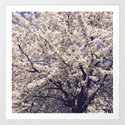 Tree in bloom by circus