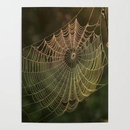 Spider Web and Morning Mist Poster