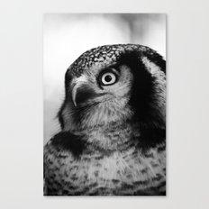 Owl series no.4 Canvas Print