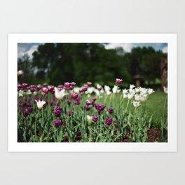 Film -- Tulips Art Print