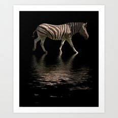 Zebra Reflections Art Print