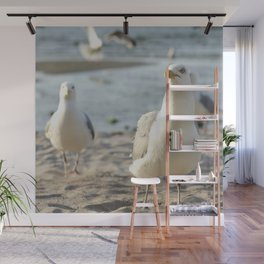 #Curious #seagulls in #front of the #camera Wall Mural
