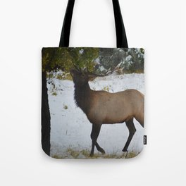 Elk reaches up for the green leaves in an early September snowfall, Jasper National Park Tote Bag