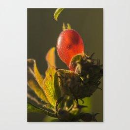 Translucency Canvas Print