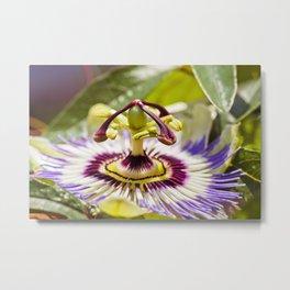 Passion Flower Bloom Metal Print