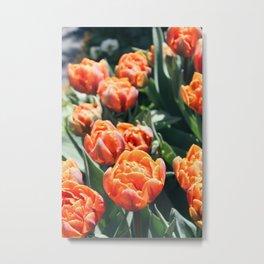 Orange Roses Metal Print
