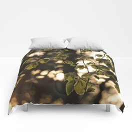 Sunlight and Oak Tree Leaves Comforters