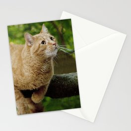 Photograph of a Cat hanging on a Limb Stationery Cards