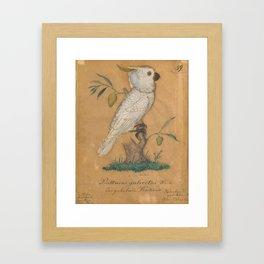 Psittacus Galeritus Whiteder Gehelmte Kakadu Vaterland Unbekannt (Unknown Origin) New-Sudwales (New Framed Art Print