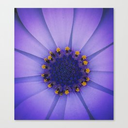 Ring of Gold Canvas Print