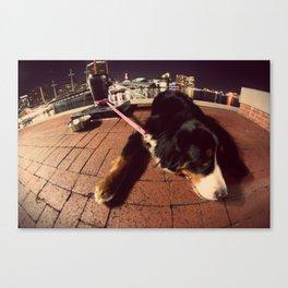 Dog Waiting Canvas Print