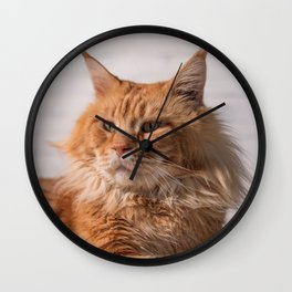 Purebred red Maine Coon cat lying on the floor at home Wall Clock