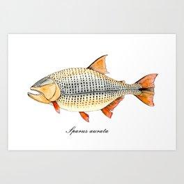 Golden Dorado. Illustration of fish. Art Print