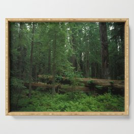 Fallen Tree in The Dense Forest Serving Tray