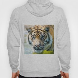 Tiger in the water  Hoody