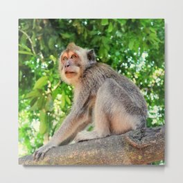Monkey Forest - Nature Photography Metal Print