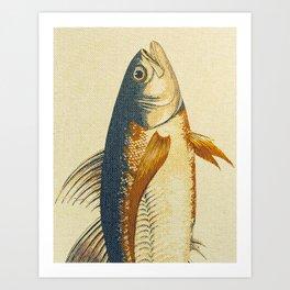 Piscibus 8 Art Print