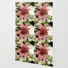 SOFT PINK FLOWER #1 - Azaleas Wallpaper