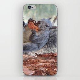 Squirrel Snack iPhone Skin