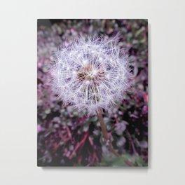 Dainty Dandelion Metal Print
