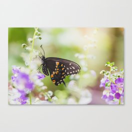Butterfly Moments Canvas Print
