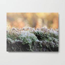 Frosty Moss Metal Print
