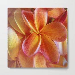Orange Plumeria Metal Print
